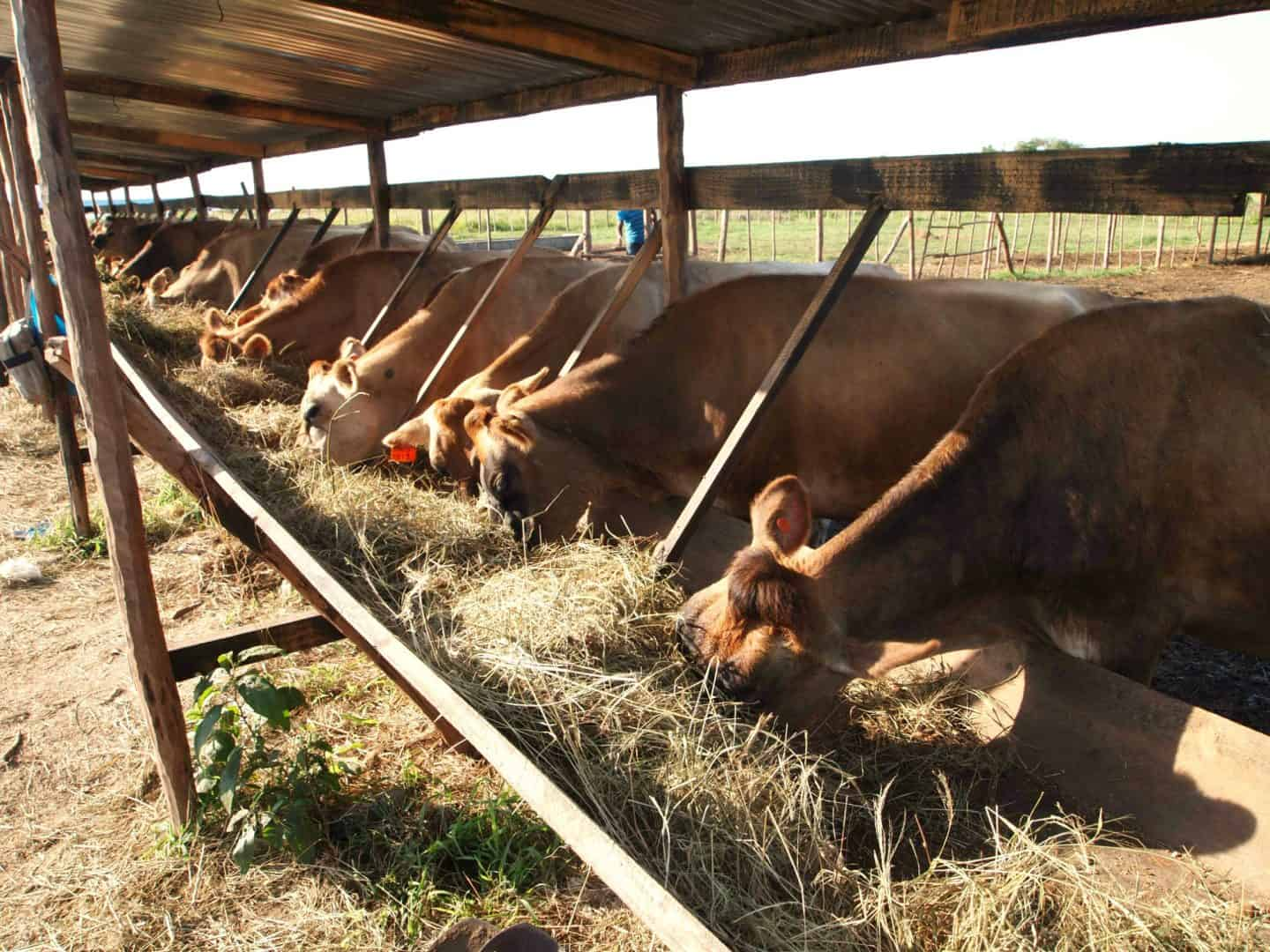 Global livestock antibiotic use expected to increase 67% by 2030