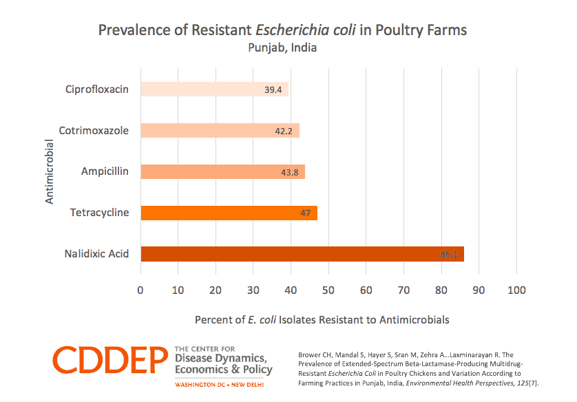 Prevalence of Resistant E. Coli in Poultry Farms