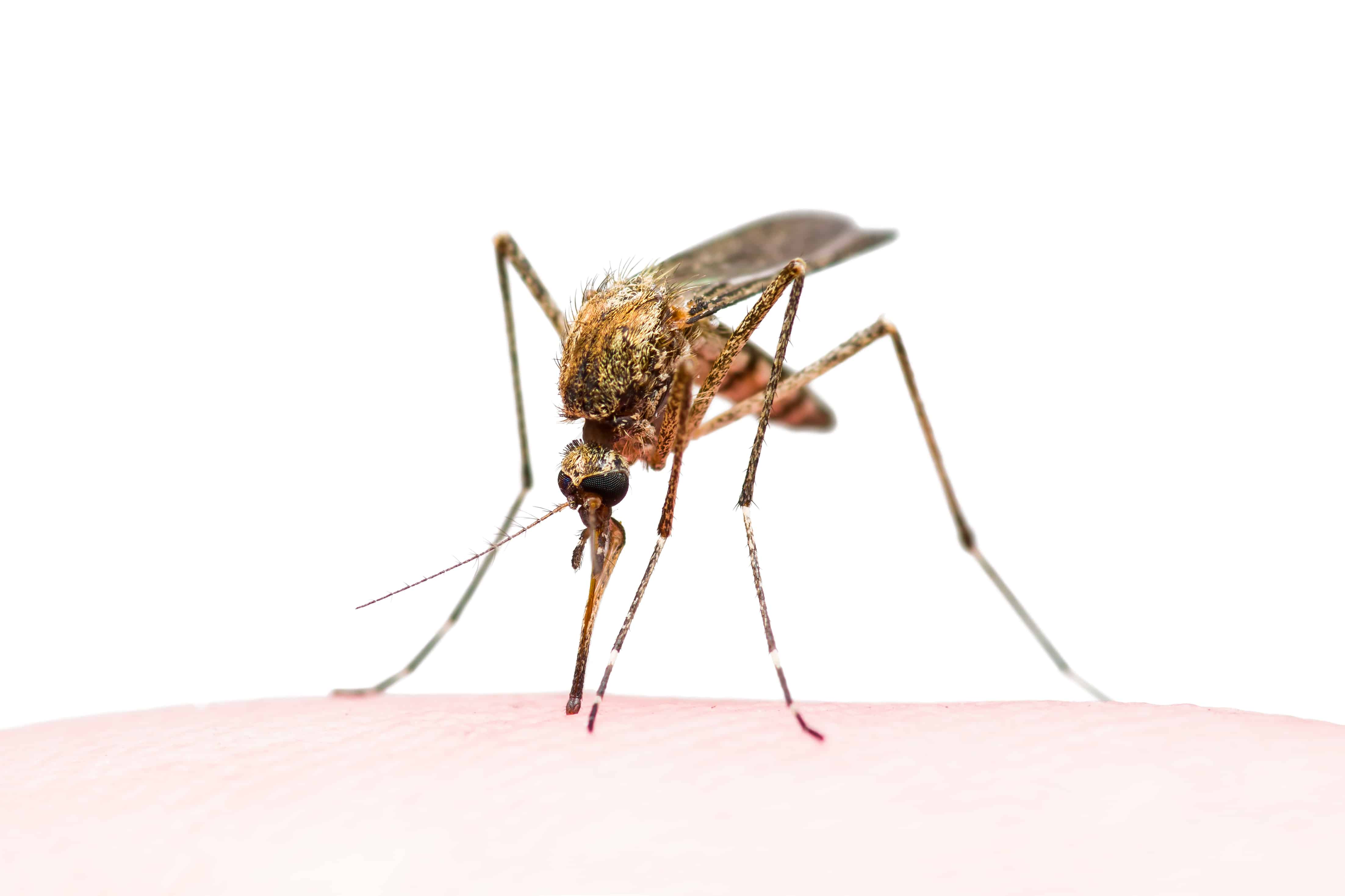 Weekly Digest: COVID-19 in malaria-endemic region; Geographic disparities and impact of COVID-19; Antimicrobial resistance among children in Africa: need for paediatric clinical trials; Utility of broad-spectrum antibiotics for diagnosing pulmonary tuberculosis in adults.