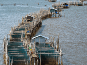 Weekly Digest: Antimicrobial resistance trends in aquaculture from the last 20 years highlight the urgent need for scaled-up surveillance;Mental and neurological disorders linked to higher COVID-19 susceptibility and mortality