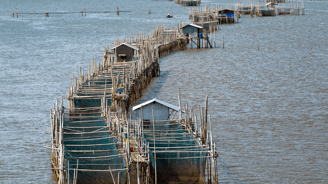 Antimicrobial resistance trends in aquaculture from the last 20 years highlight the urgent need for scaled-up surveillance